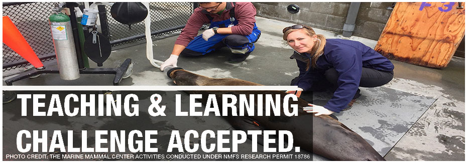CDPM Graduate Student, Alissa Deming, Quoted in The Washington Post for Work with Sea Lions