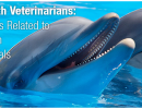 Dolphin Behavior