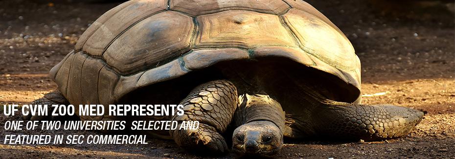 SEC Tortoise