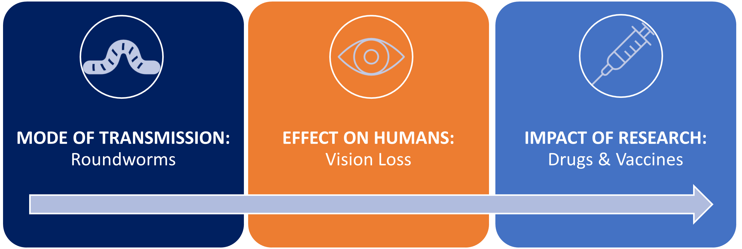 A graphic illustrating how roundworms introduce vision loss in humans, with the impact of research being new drugs and vaccines.