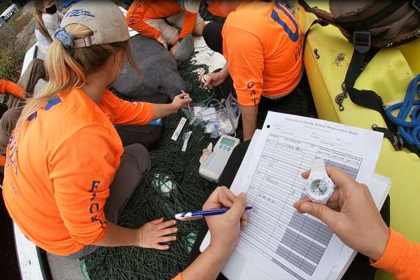Stranding biologist's perspective of a manatee health assessment after a rescue